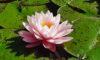 The 6th Paramita – Prajnā – The perfection of wisdom